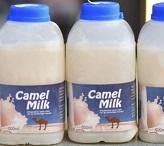 Верблюжий молоко и сахарный диабет